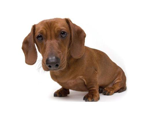 los-perros-distinguen-a-las-malas-personas-1