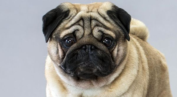 los-perros-distinguen-a-las-malas-personas