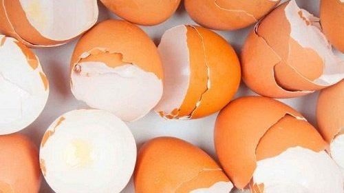 beneficios-de-la-cascara-de-huevo