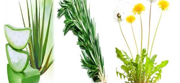 beneficios-de-las-plantas-medicinales
